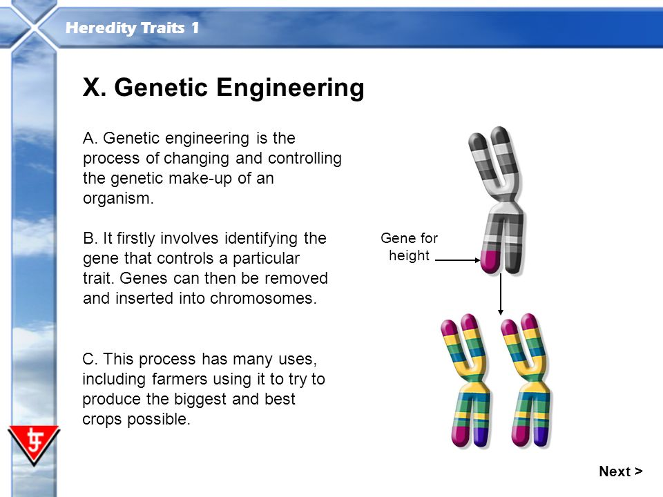 a description of genetic engineering as an altering of genes in a particular species A phd with lab experience in genetic engineering examines engineering be used for curing genetic gene for enhancement of a particular trait--say.
