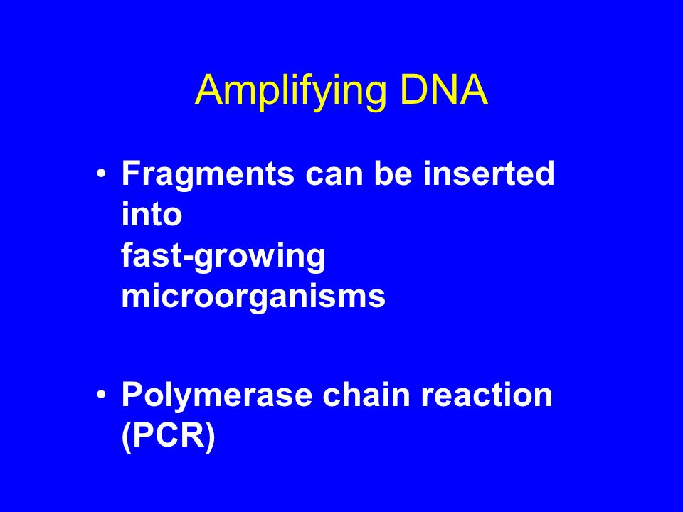 Amplifying DNA Fragments can be inserted into fast-growing microorganisms.