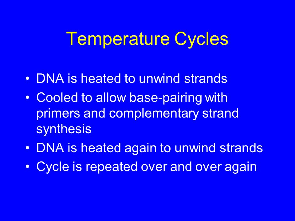 Temperature Cycles DNA is heated to unwind strands