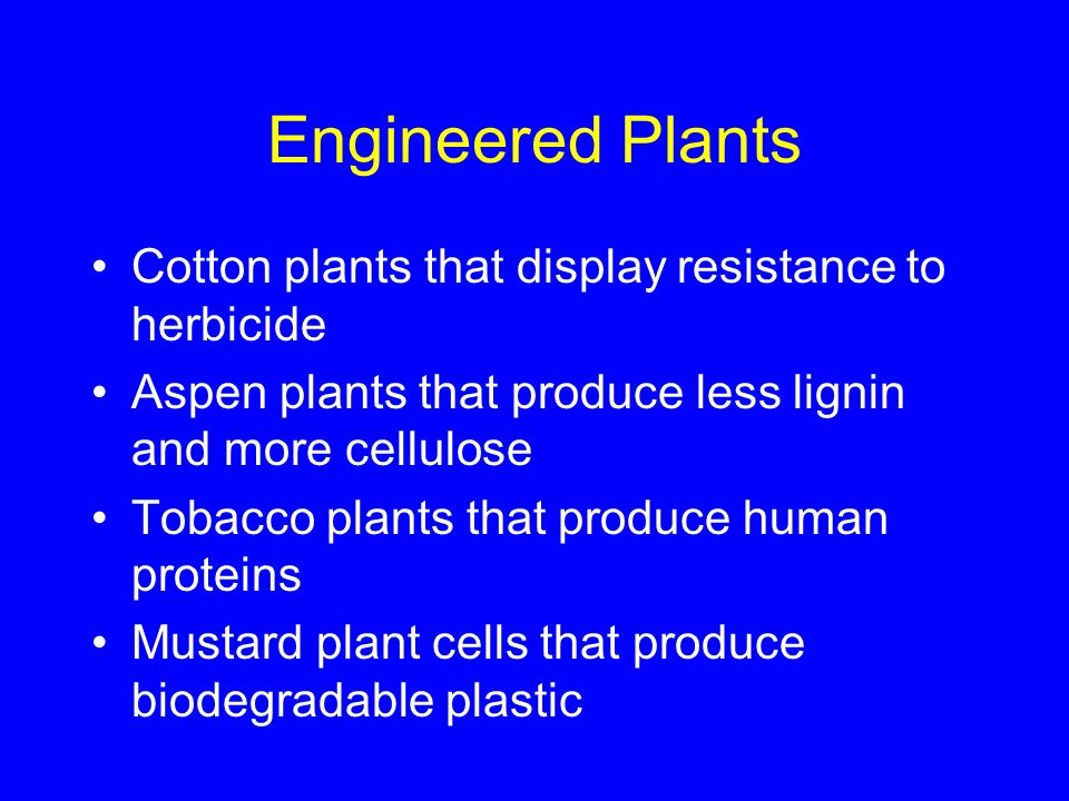 Engineered Plants Cotton plants that display resistance to herbicide