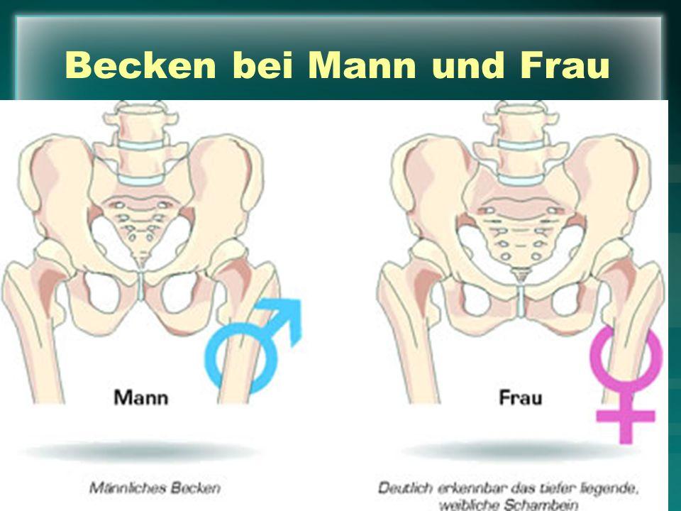 Atemberaubend Menschliche Anatomie Weibliches Becken Galerie ...