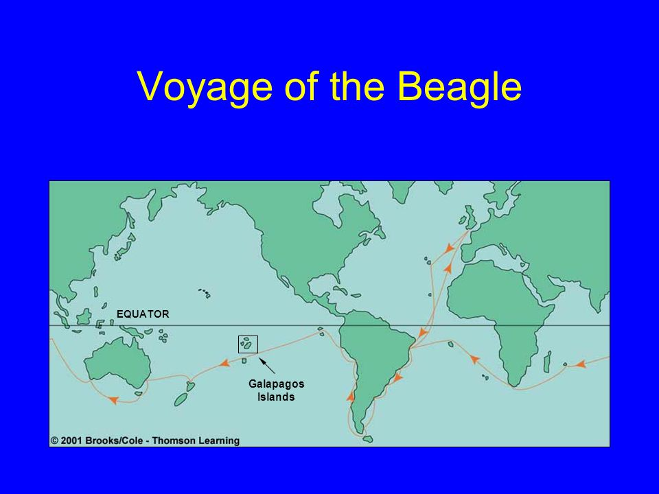 Voyage of the Beagle EQUATOR Galapagos Islands
