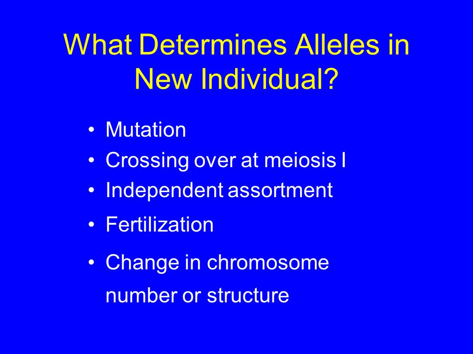 What Determines Alleles in New Individual