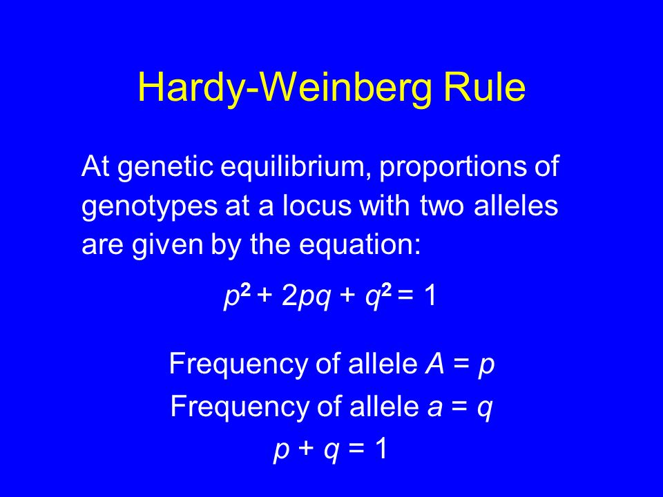 Hardy-Weinberg Rule At genetic equilibrium, proportions of genotypes at a locus with two alleles are given by the equation: