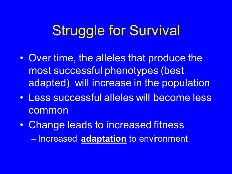 Struggle for Survival Over time, the alleles that produce the most successful phenotypes (best adapted) will increase in the population.