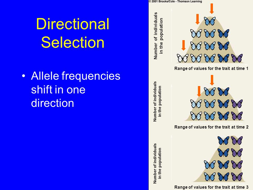 Directional Selection