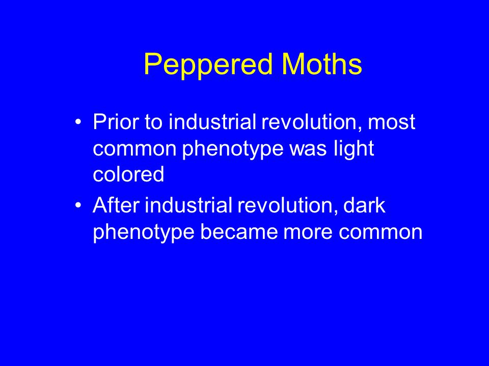 Peppered Moths Prior to industrial revolution, most common phenotype was light colored.