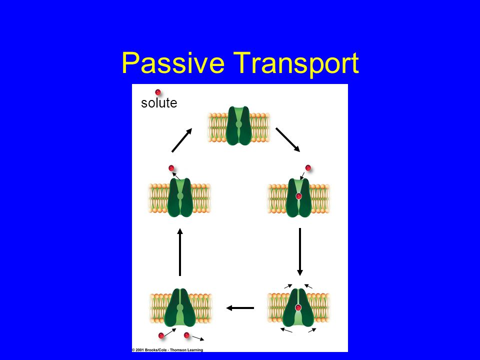 Passive Transport solute