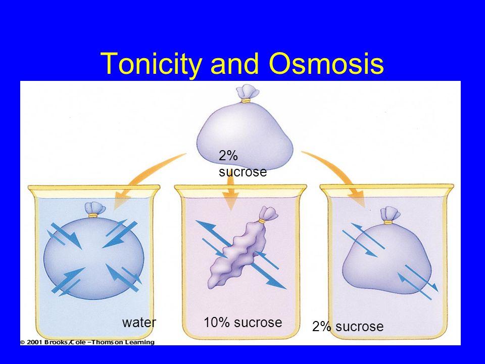 Tonicity and Osmosis 2% sucrose water 10% sucrose 2% sucrose