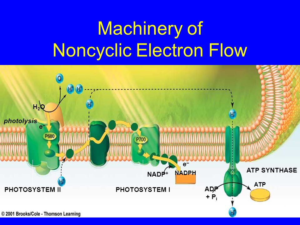 Machinery of Noncyclic Electron Flow