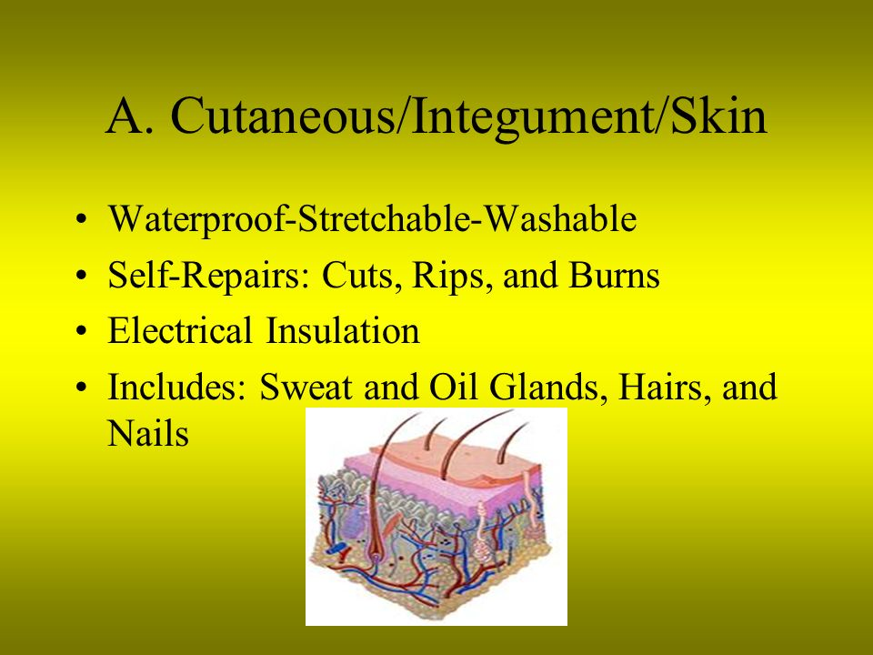 A. Cutaneous/Integument/Skin