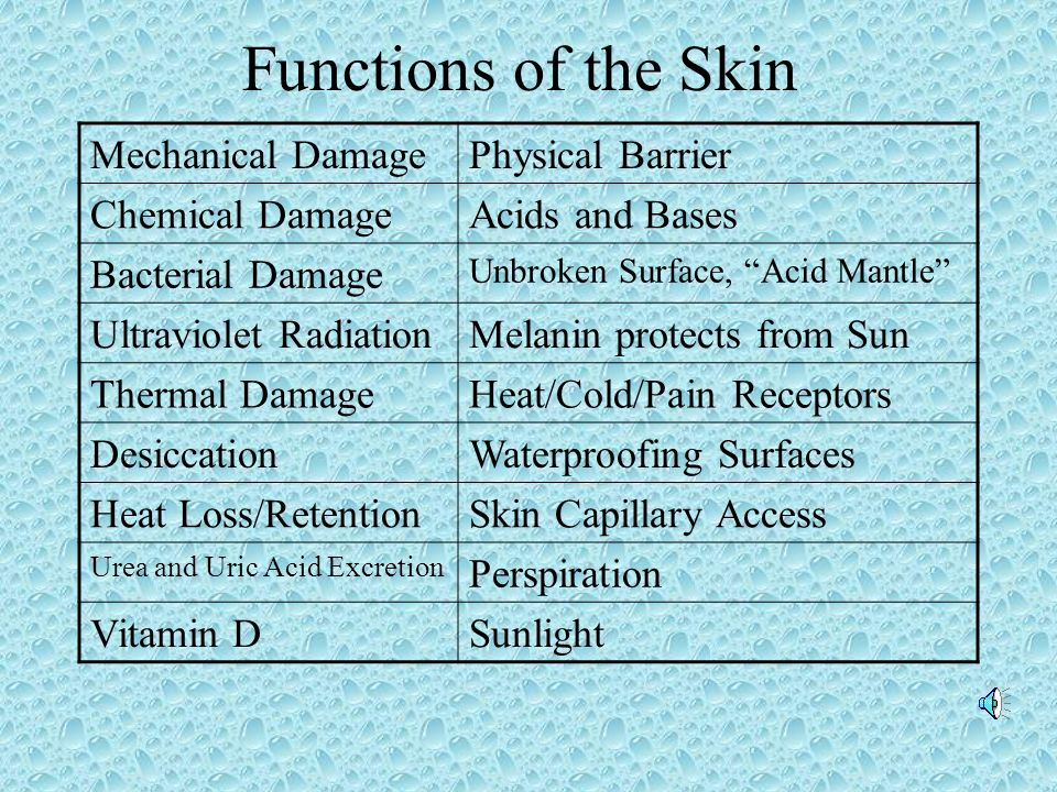 Functions of the Skin Mechanical Damage Physical Barrier