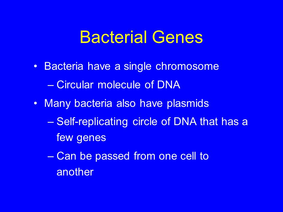 Bacterial Genes Bacteria have a single chromosome