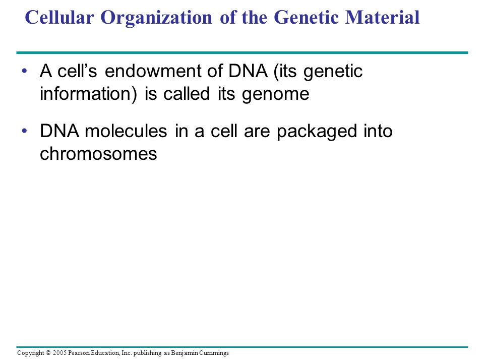 Cellular Organization of the Genetic Material
