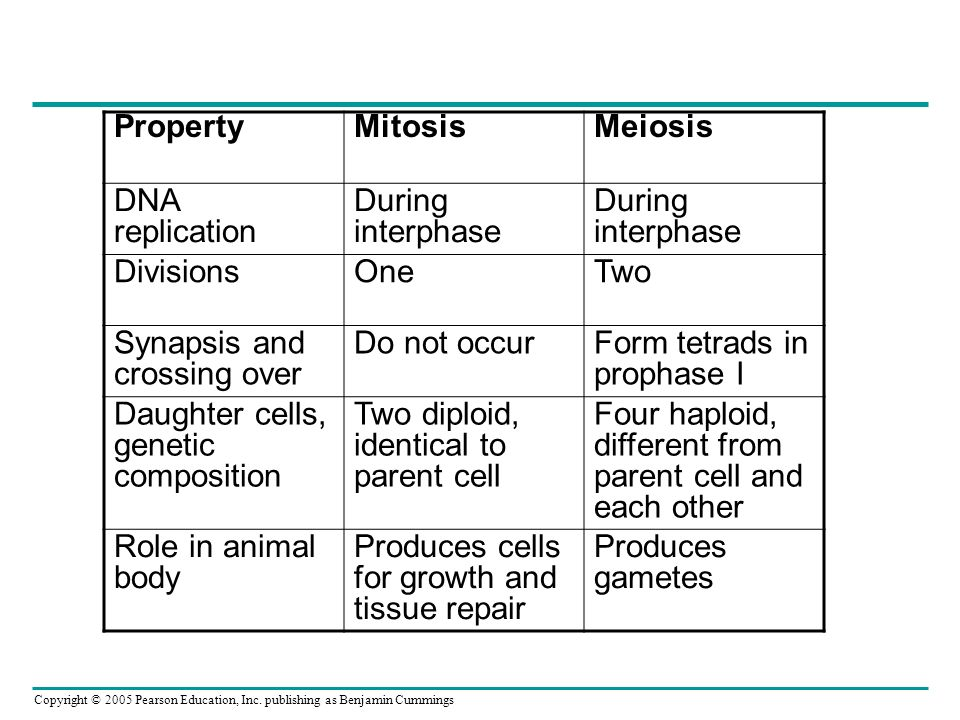 Property Mitosis. Meiosis. DNA replication. During interphase. Divisions. One. Two. Synapsis and crossing over.