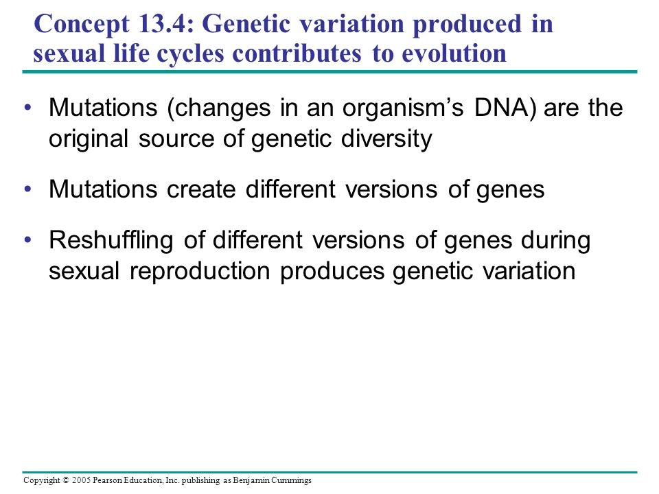 Concept 13.4: Genetic variation produced in sexual life cycles contributes to evolution