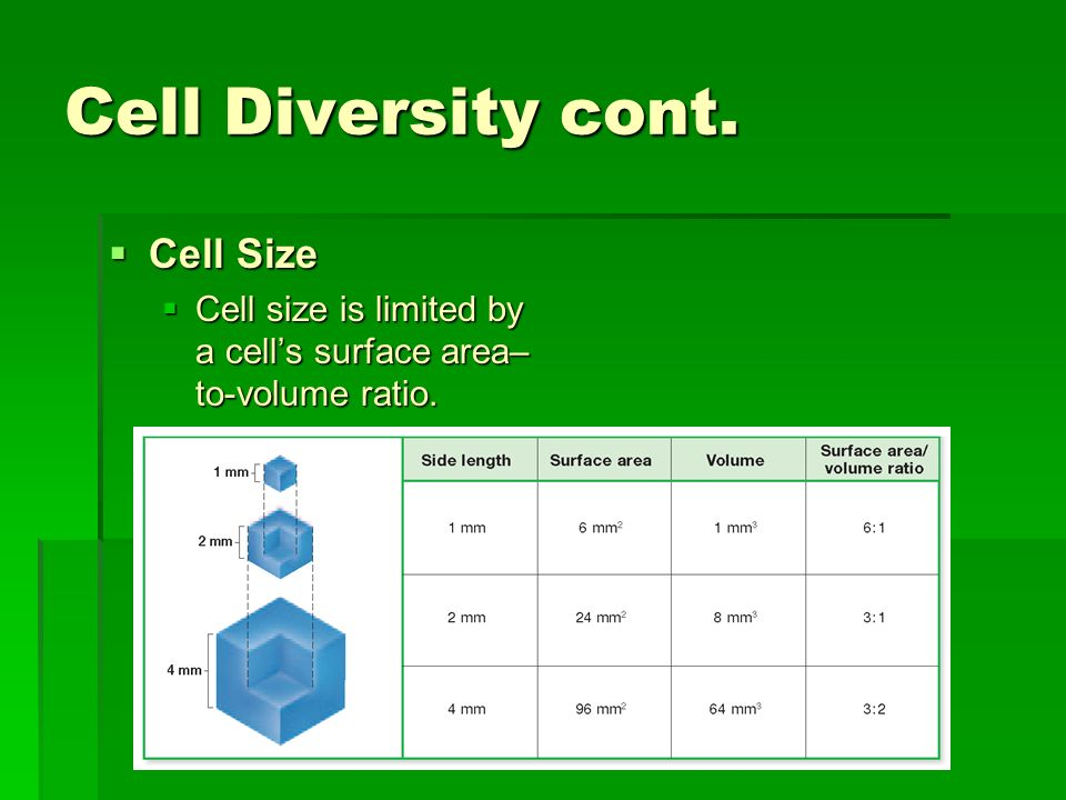 Cell Diversity cont. Cell Size