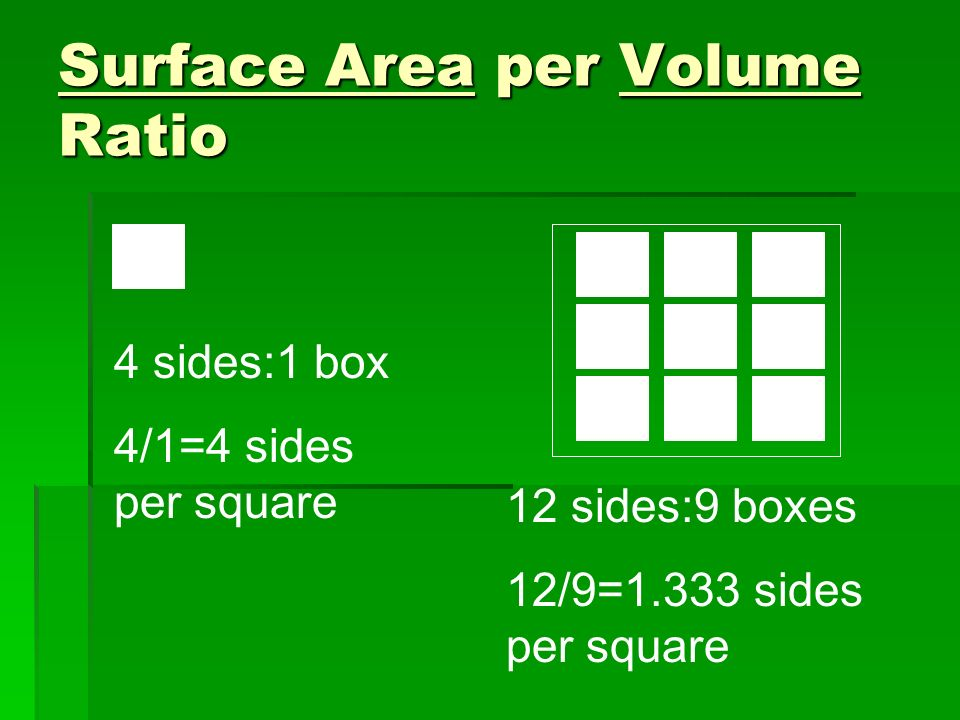 Surface Area per Volume Ratio