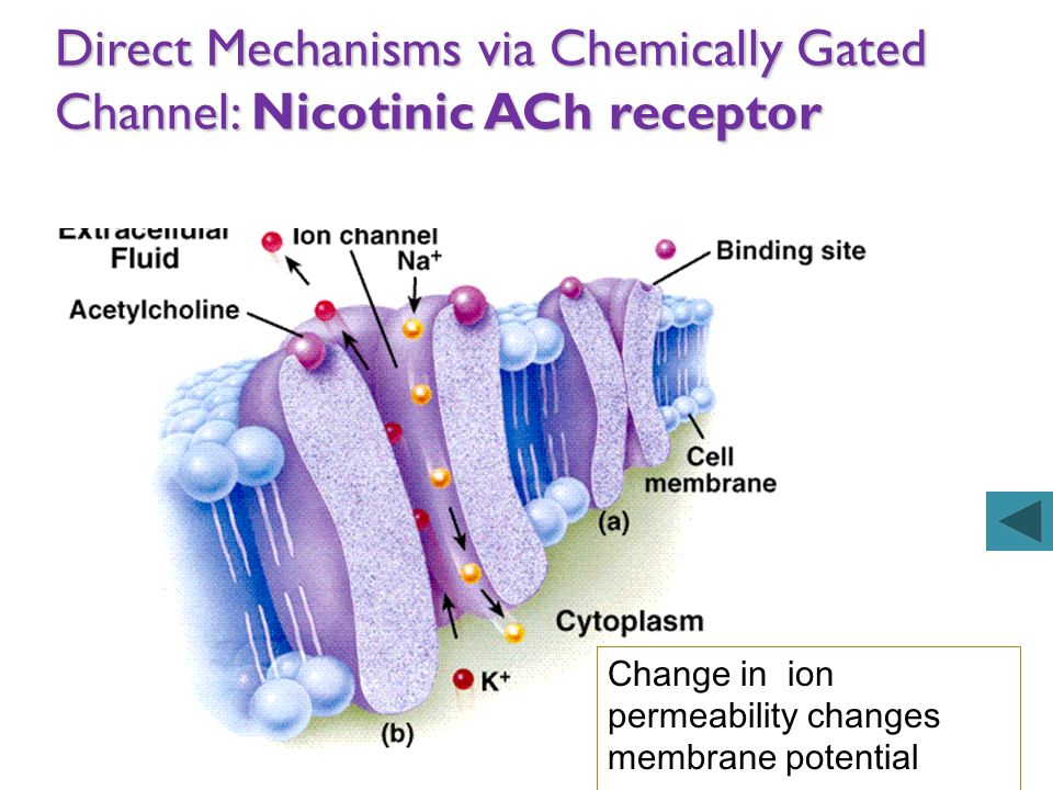 Direct Mechanisms via Chemically Gated Channel: Nicotinic ACh receptor