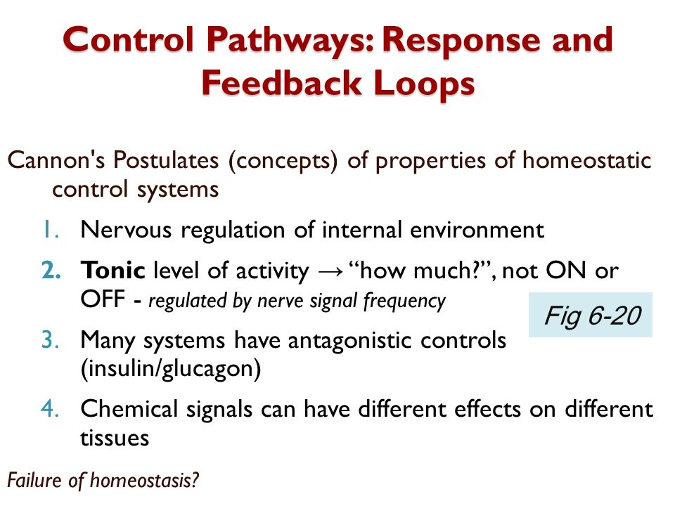 Control Pathways: Response and Feedback Loops