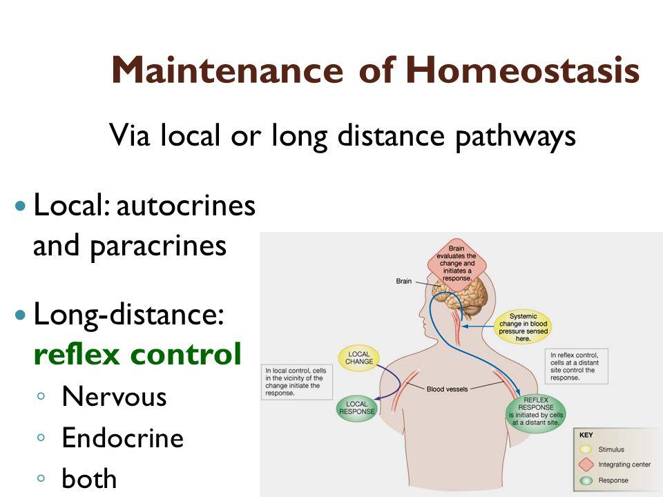 Maintenance of Homeostasis