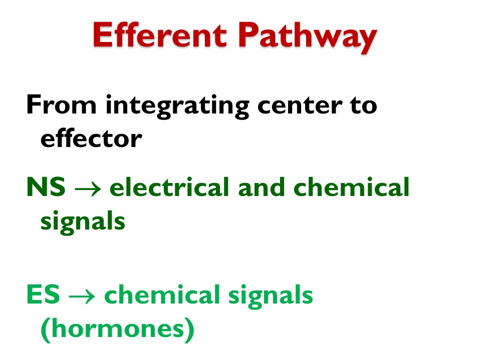 Efferent Pathway From integrating center to effector NS  electrical and chemical signals ES  chemical signals (hormones)