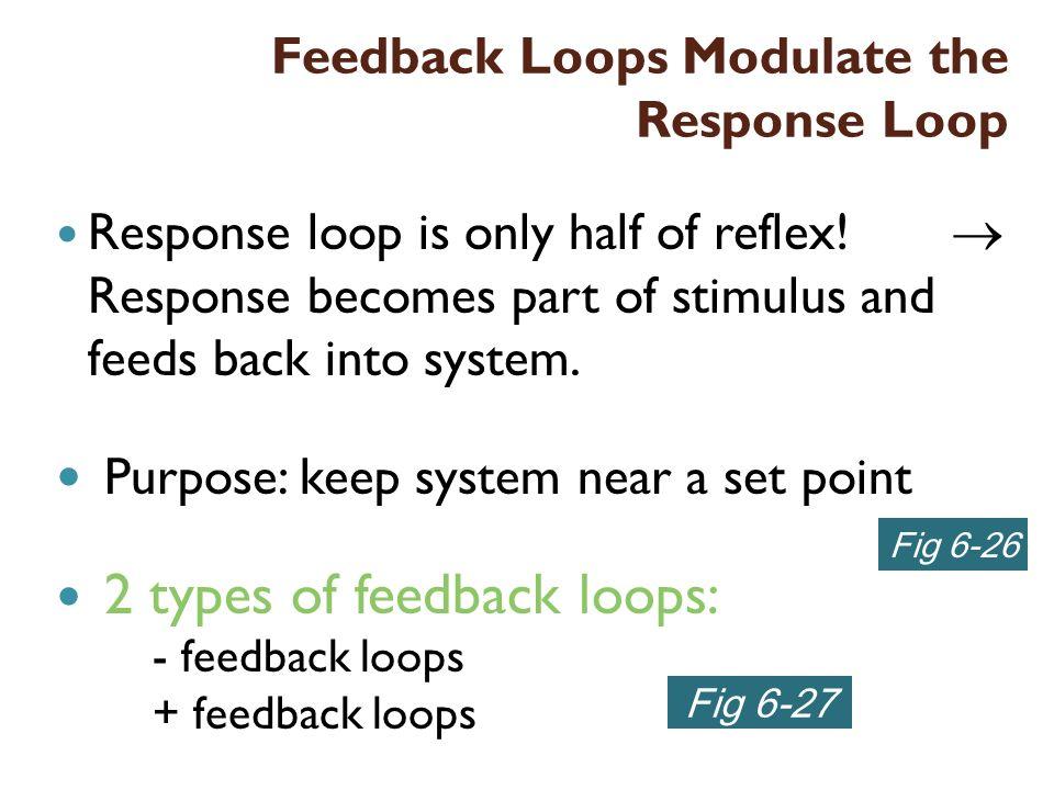 Feedback Loops Modulate the Response Loop