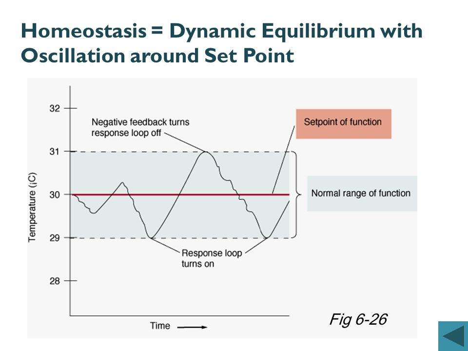 Homeostasis = Dynamic Equilibrium with Oscillation around Set Point