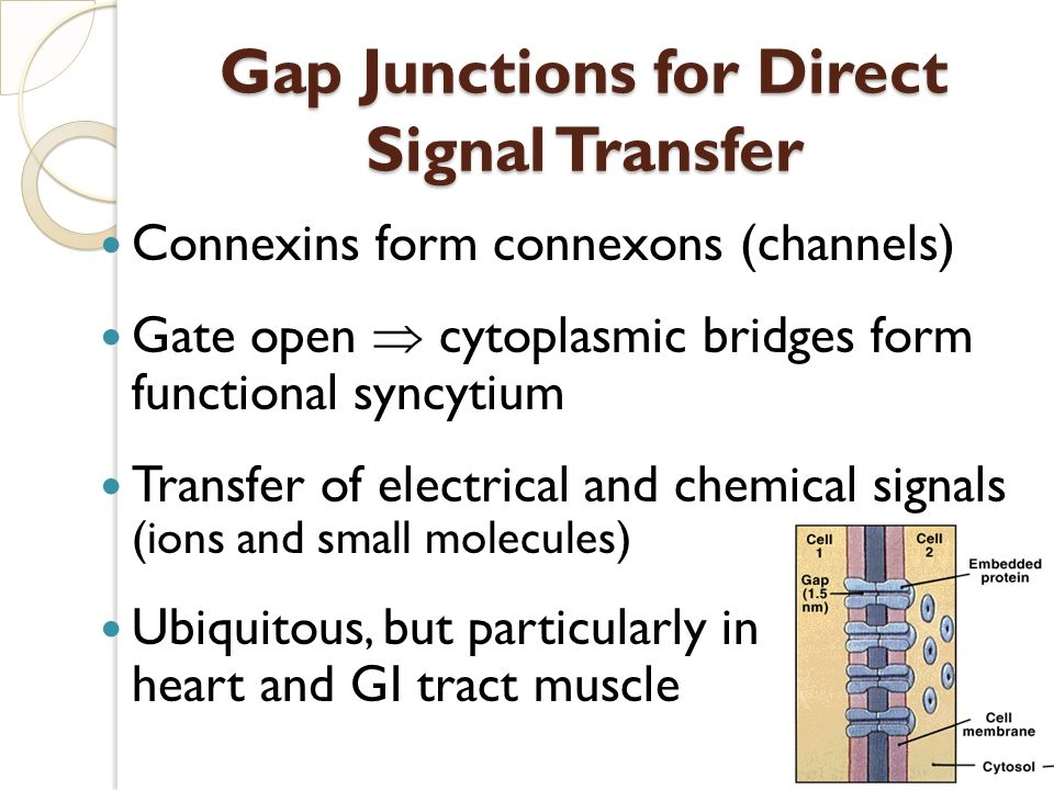Gap Junctions for Direct Signal Transfer