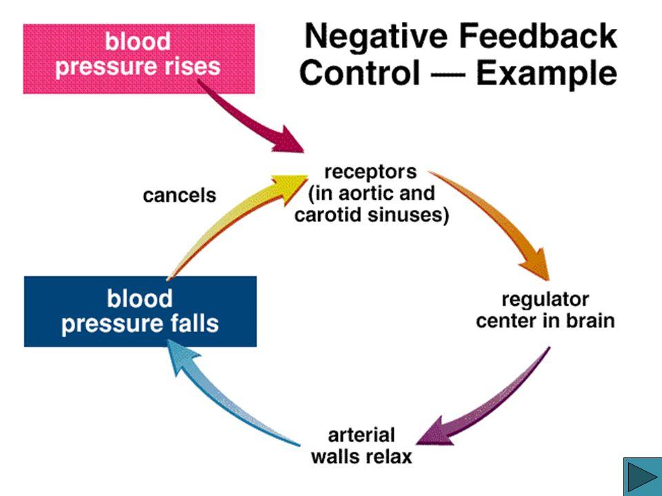Negative Feedback Example