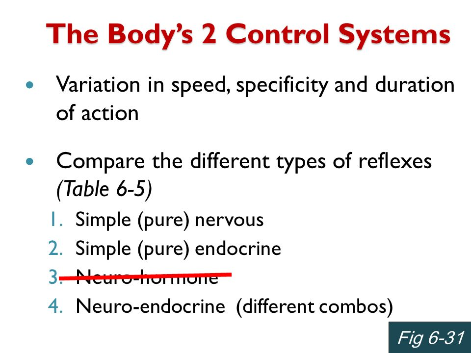 The Body's 2 Control Systems