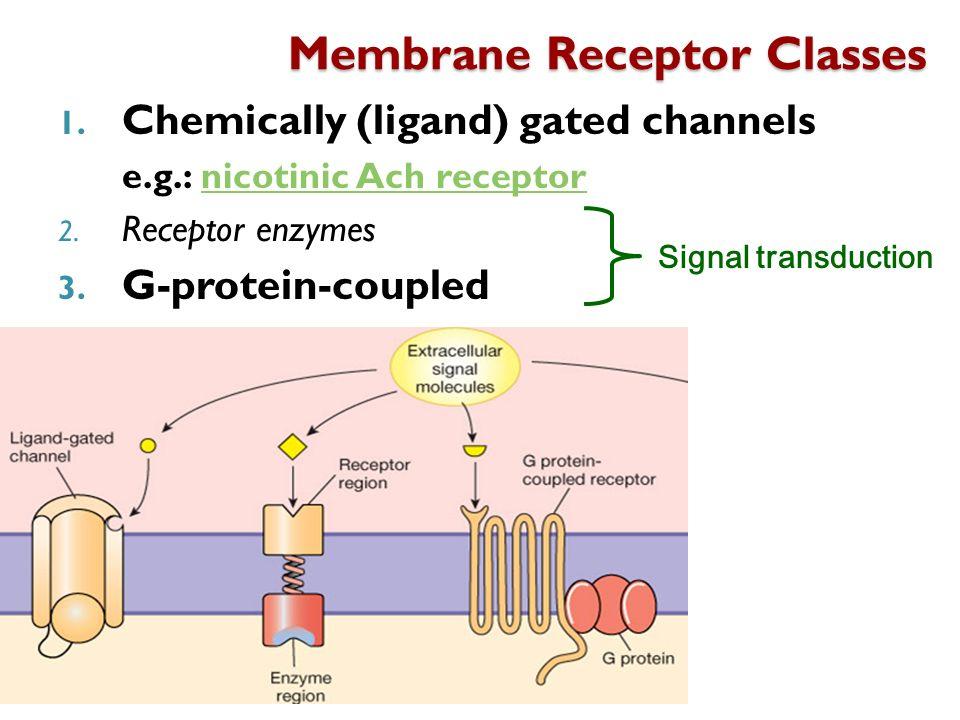 Membrane Receptor Classes
