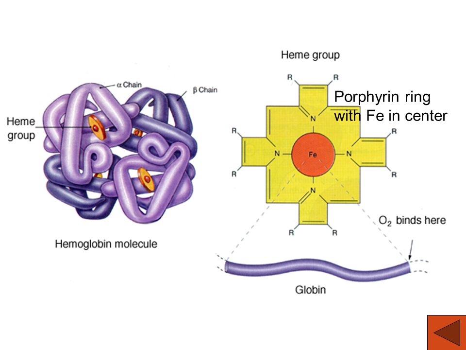 Hb Structure Porphyrin ring with Fe in center