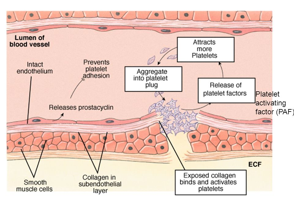 Platelet Plug Formation
