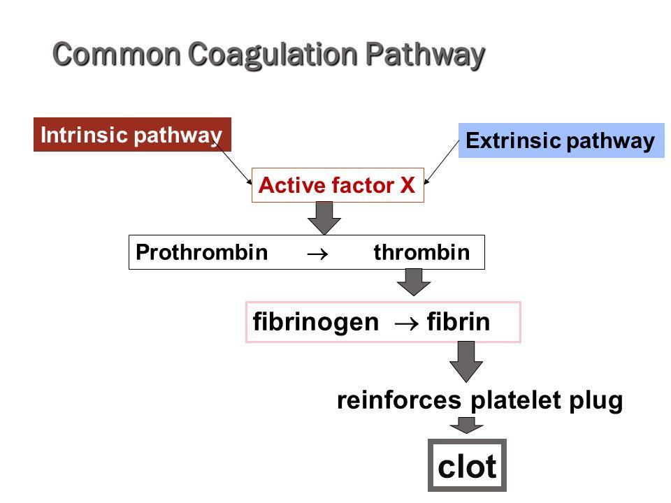 Common Coagulation Pathway