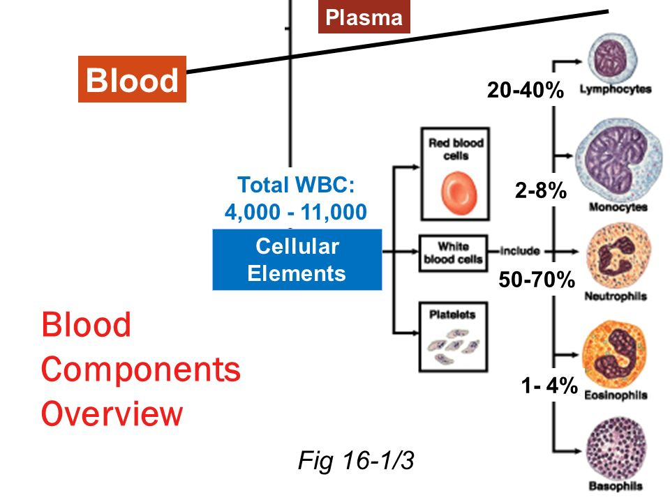 Blood Components Overview