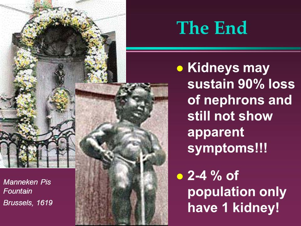 The End Kidneys may sustain 90% loss of nephrons and still not show apparent symptoms!!! 2-4 % of population only have 1 kidney!