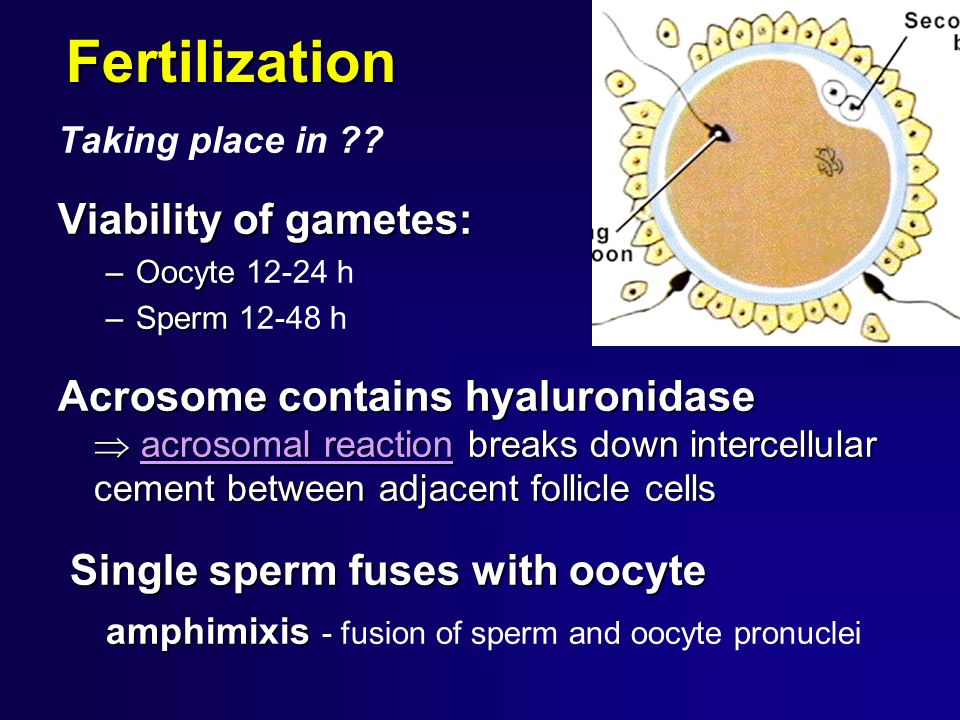 Fertilization Viability of gametes: