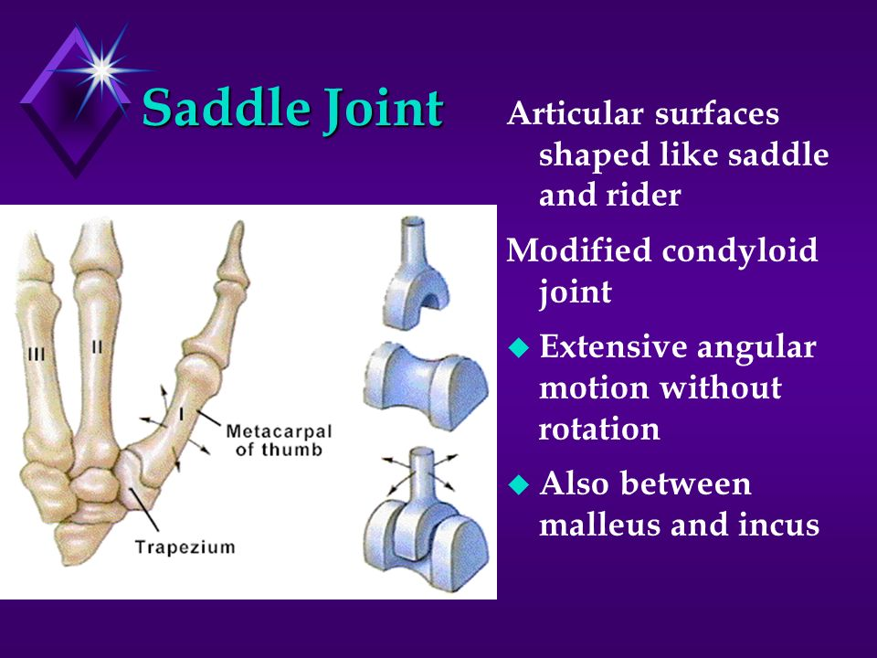 Saddle Joint Articular surfaces shaped like saddle and rider