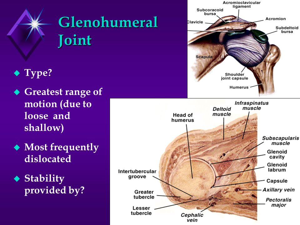 Glenohumeral Joint Type