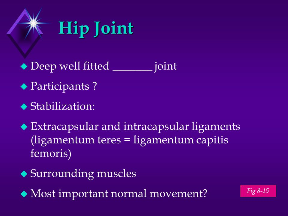 Hip Joint Deep well fitted _______ joint Participants Stabilization: