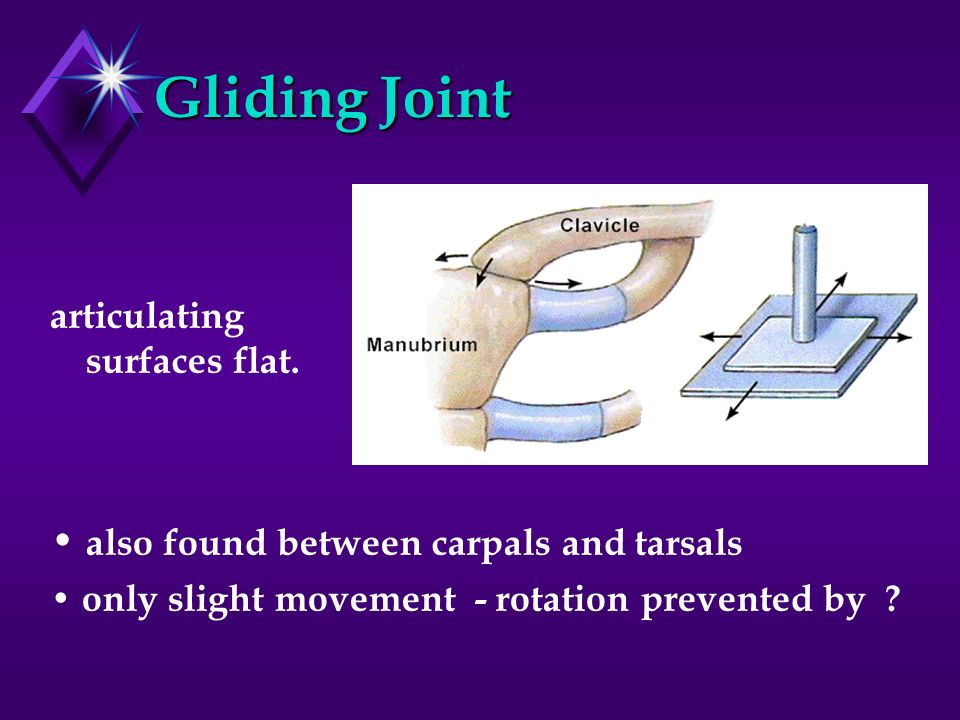 Gliding Joint • also found between carpals and tarsals