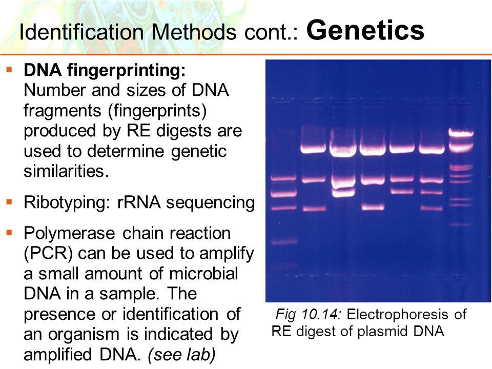Identification Methods cont.: Genetics
