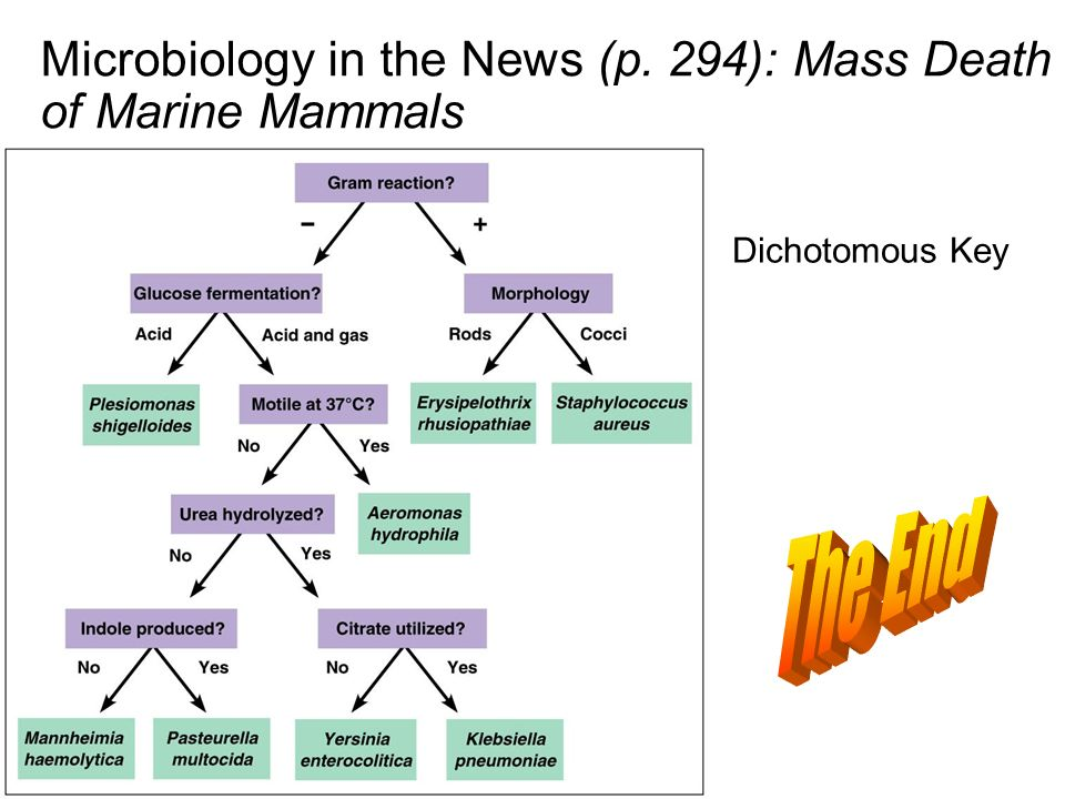 Microbiology in the News (p. 294): Mass Death of Marine Mammals