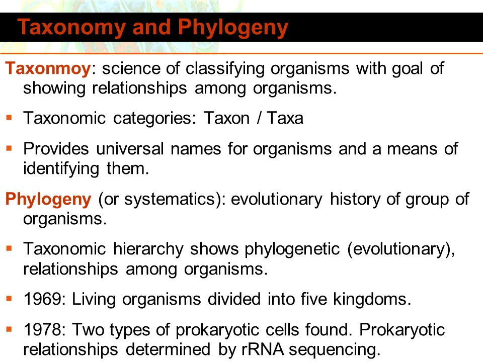 Taxonomy and Phylogeny
