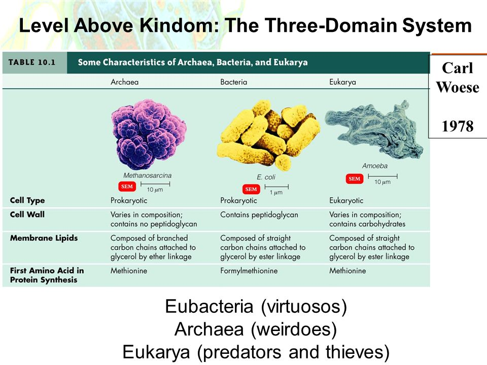 Level Above Kindom: The Three-Domain System