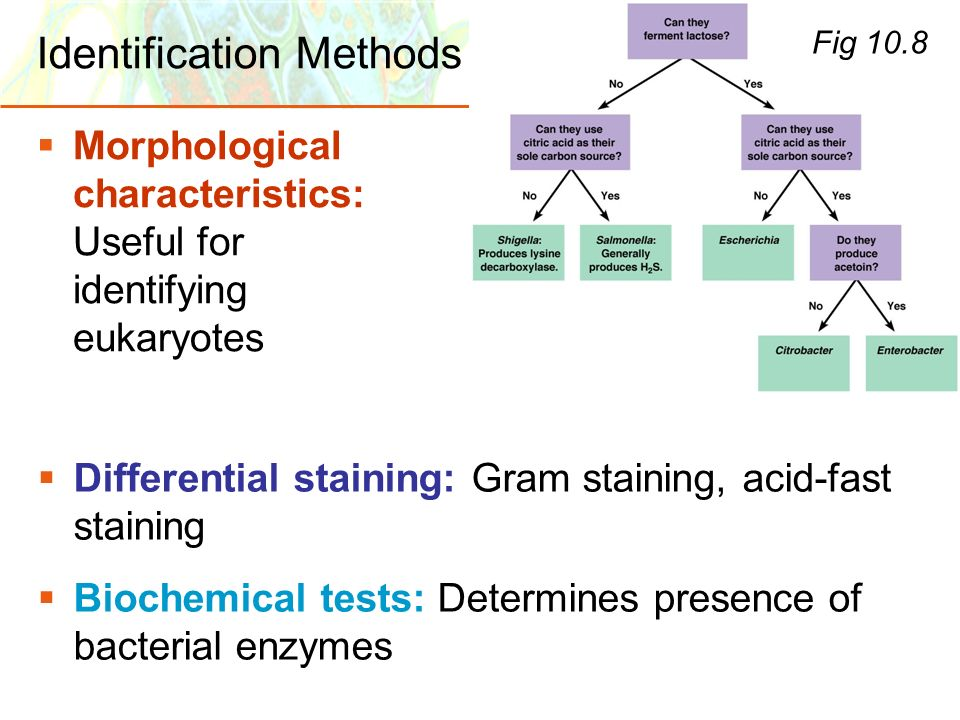 Identification Methods