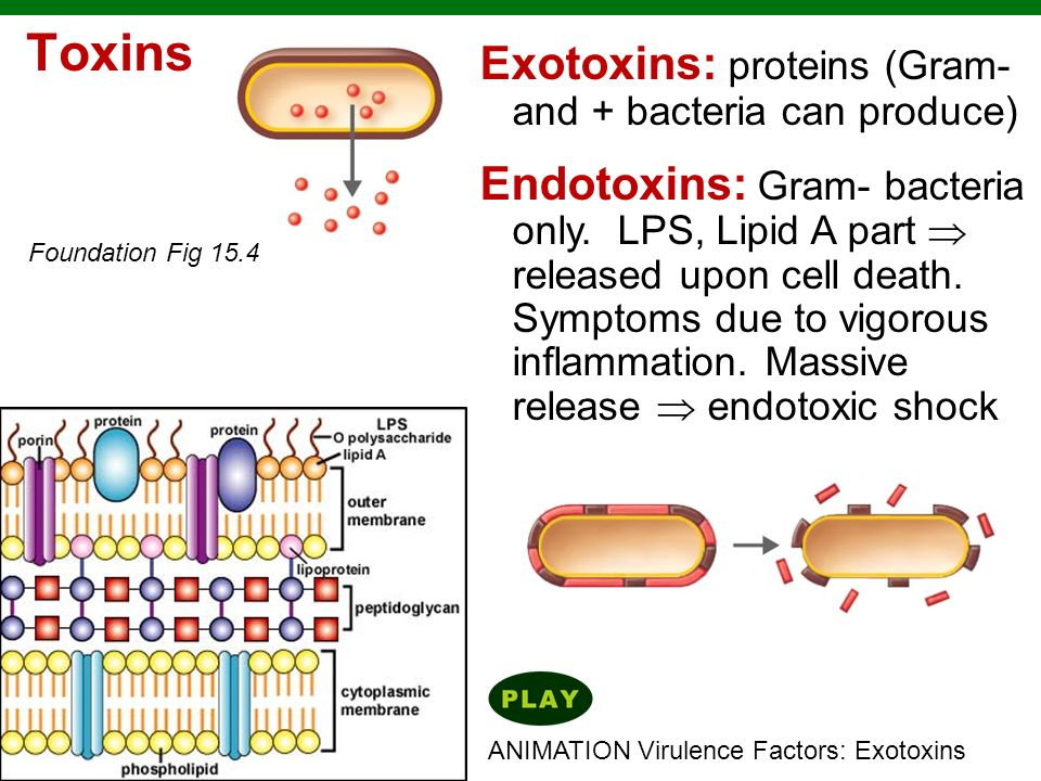 Toxins Exotoxins: proteins (Gram- and + bacteria can produce)