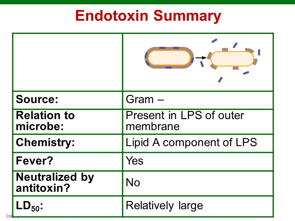 Endotoxin Summary Source: Gram – Relation to microbe: