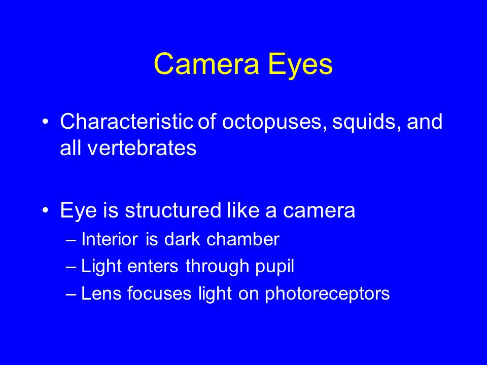 Camera Eyes Characteristic of octopuses, squids, and all vertebrates